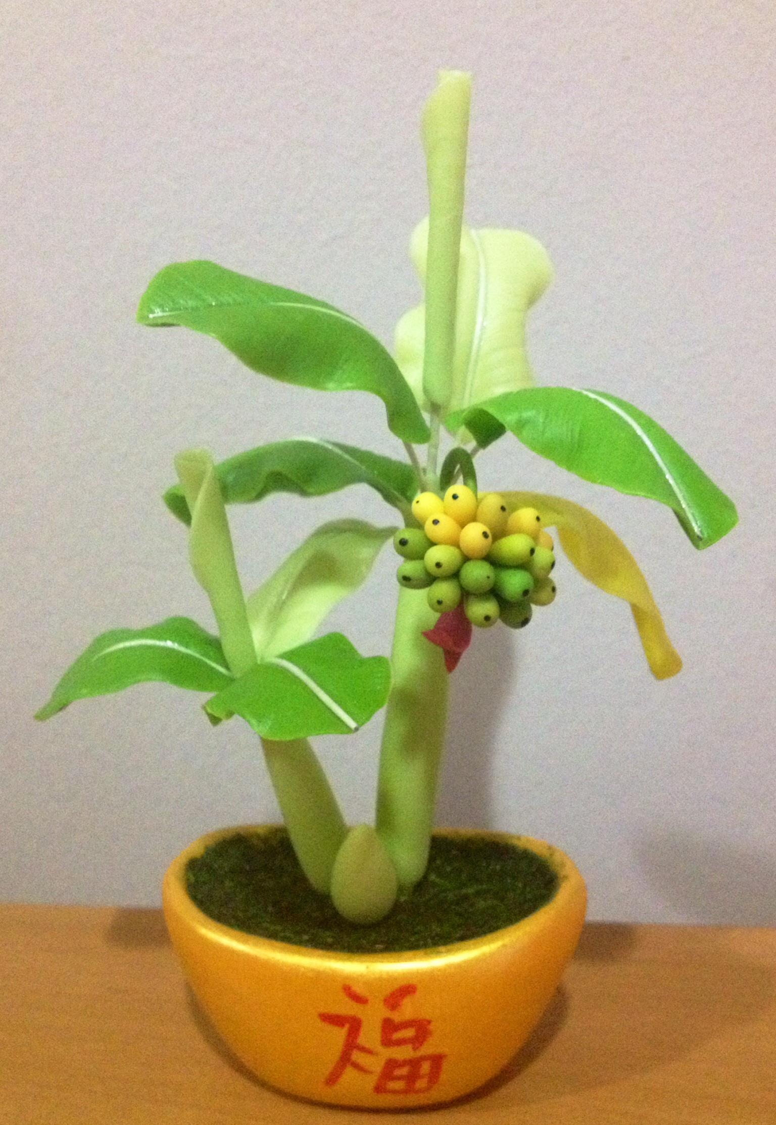 B001-กล้วยจิ๋ว
