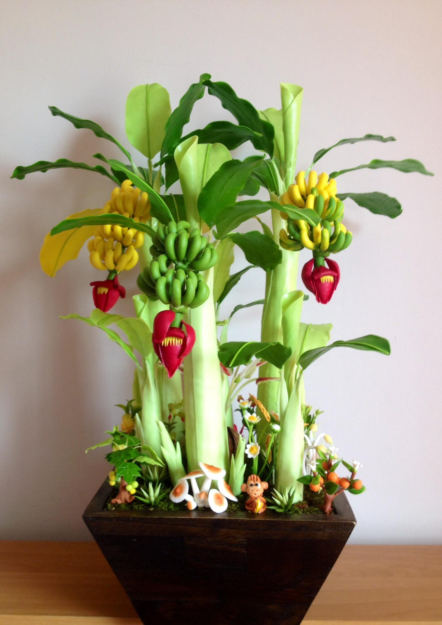 B018-ต้นกล้วยหอมไซร์ใหญ่