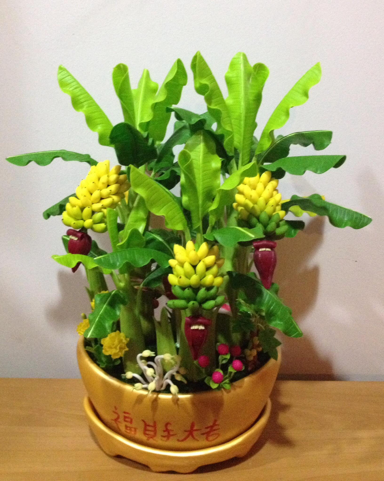 B002-ต้นกล้วย 12 นิ้ว