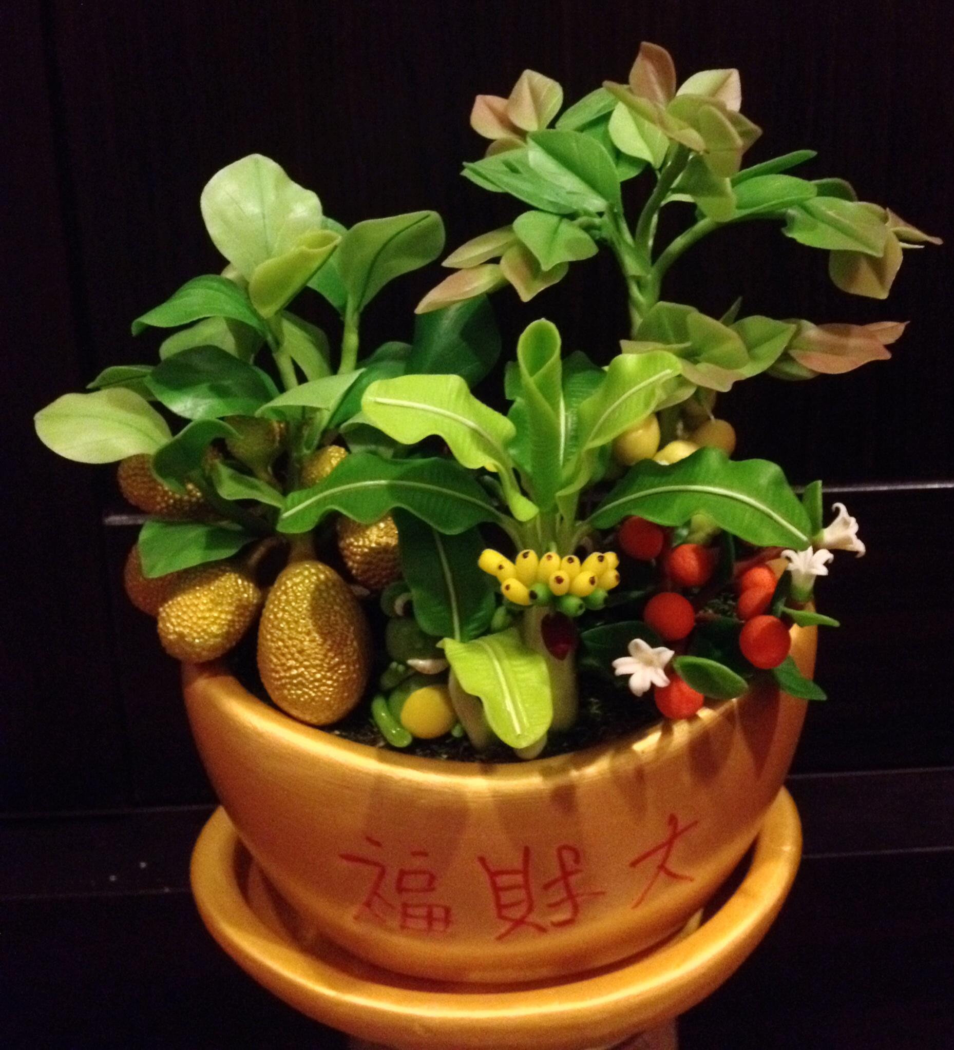 C001-สวนต้นไม้มงคล มะยม ส้ม กล้วย ขนุน_ไซร์ 3-6 นิ้ว
