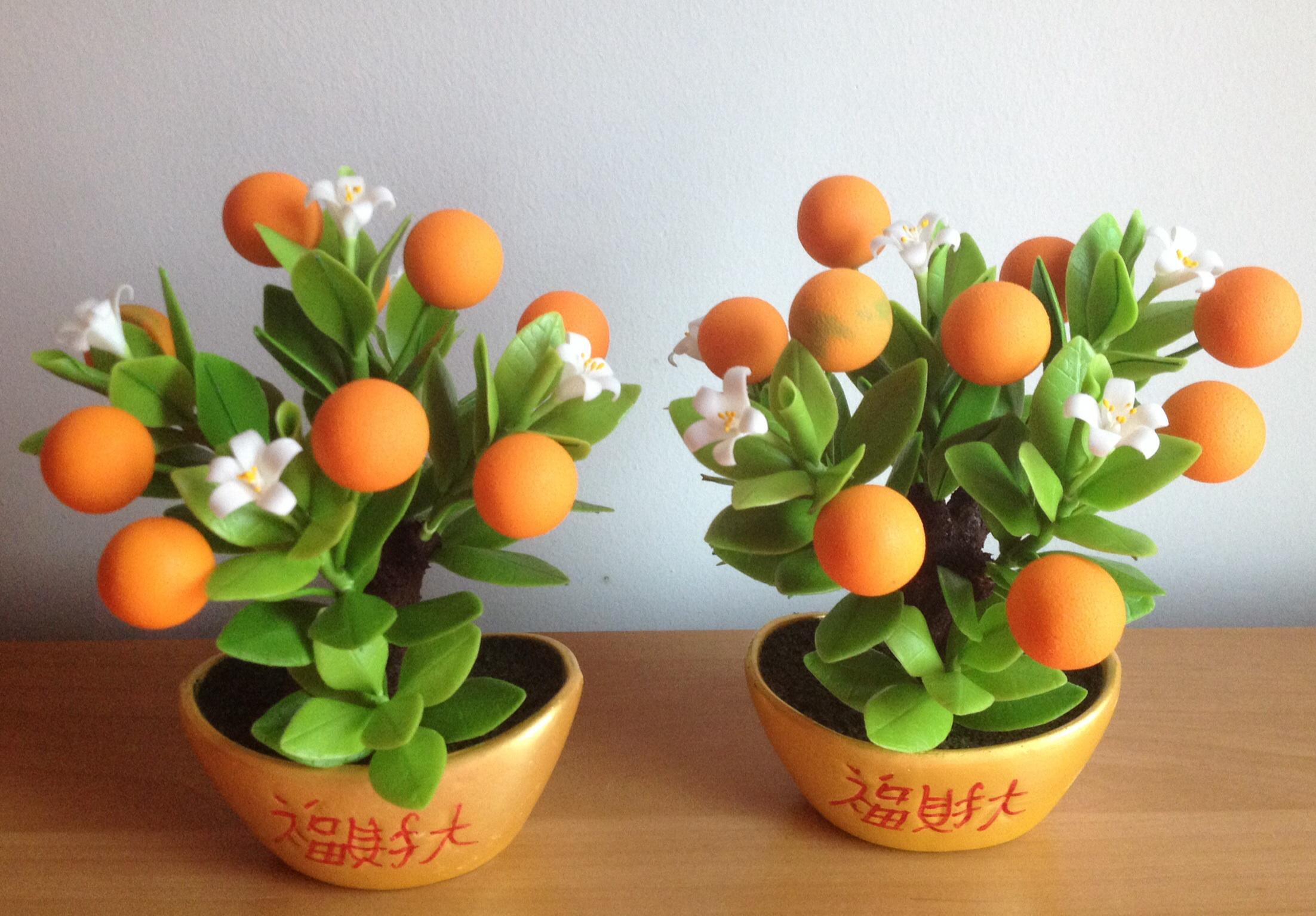 S006-ต้นส้มสูง 6 นิ้ว จำนวน 9 ลูก