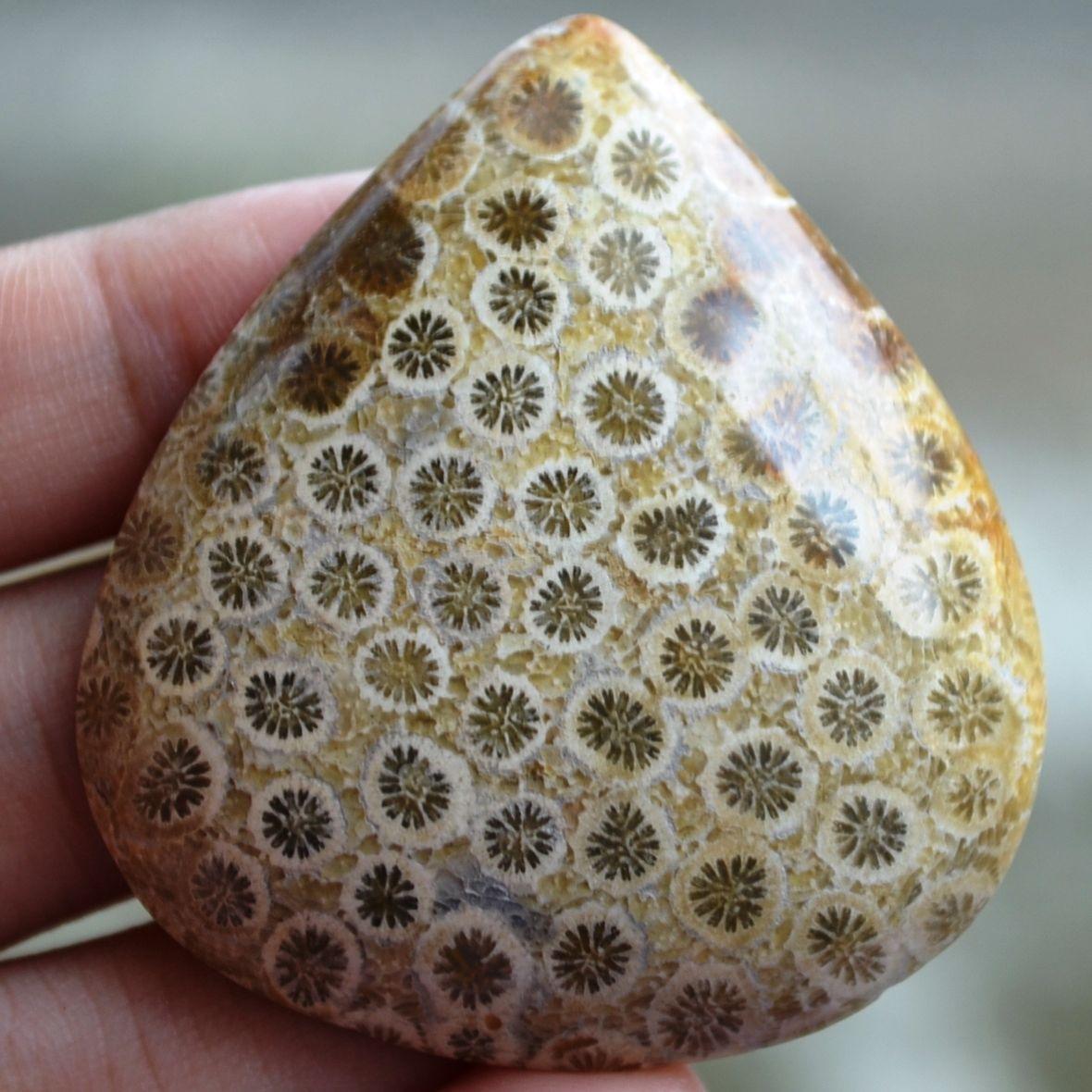 ฟอสซิลหินปะการังขัด Fossil Coral ใหญ่และหนา สำหรับห้อยคอ หรือ พวงกุญแจ คัดสวยพิเศษ #CRF017