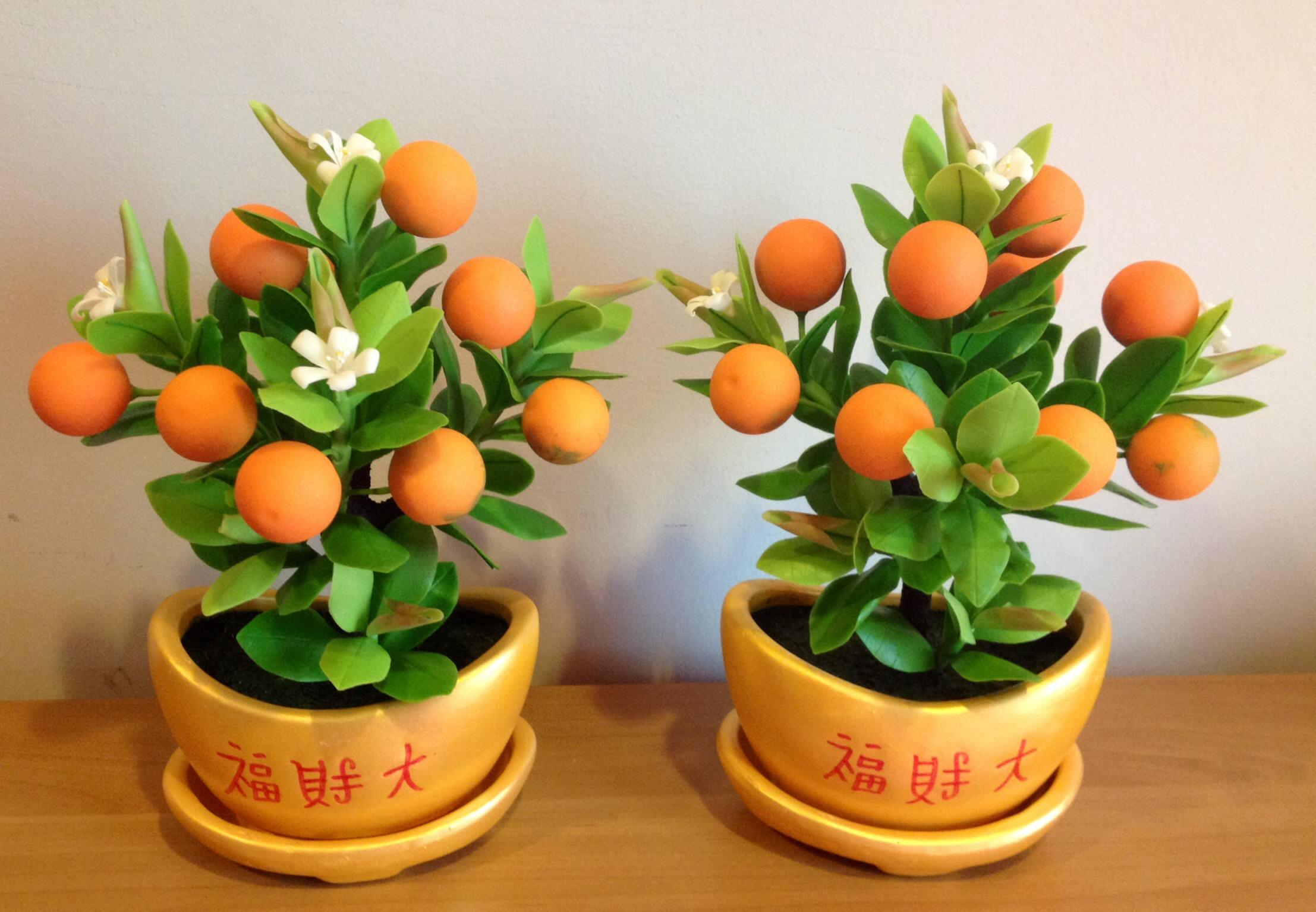 S004-ต้นส้มสูง 9 นิ้ว จำนวน 9 ลูก