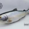 โมเดลปลาแซลมอน Salmon แบบยางอ่อนนุ่มนิ่ม ตั้งโชว์สวย ขนาดใหญ่ 18 นิ้ว