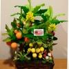 C025-สวนต้นไม้มงคล มะยม ส้ม กล้วย ขนุน_ไซร์ 3-12 นิ้ว