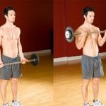 Biceps Curl Barbell ท่าฝึกหน้าแขน (Bicep)
