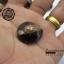 ขายเปลือกหอยเบี้ย หอยเบี้ยแก้ ขนาด 1.5 นิ้ว Monetaria caputserpentis thumbnail 4