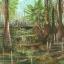 ฟอสซิลเฟิร์น ชนิด Neuropteris sp. จาก Mazon Creek, Illinois, USA #FRN002 thumbnail 7
