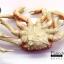 โมเดลปูอะลาสก้า Alaska Crab ตั้งโชว์สวย ขนาดใหญ่ 14 นิ้ว thumbnail 4
