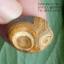 หินรูปทรงประหลาดจากทะเลทรายโกบี GOBI Eye Stone #GOBI001 thumbnail 6