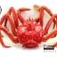 โมเดลปูอะลาสก้า Alaska Crab ตั้งโชว์สวย ขนาดใหญ่ 14 นิ้ว thumbnail 1