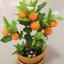 S007-ต้นส้มสูง 12 นิ้ว จำนวน 8 ลูก thumbnail 2