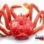 โมเดลปูอะลาสก้า Alaska Crab ตั้งโชว์สวย ขนาดใหญ่ 14 นิ้ว thumbnail 5