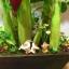 B013-ต้นกล้วย 20 นิ้ว thumbnail 2