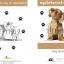 สมุดวัคซีนสุนัข แบบธรรมดา thumbnail 4