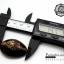 ขายเปลือกหอยเบี้ย หอยเบี้ยแก้ ขนาด 1.3 นิ้ว Monetaria caputserpentis thumbnail 2