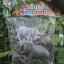 โมเดลสัตว์ชุดโขลงช้าง thumbnail 4