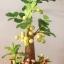 M001-ต้นมะยม 12 นิ้ว thumbnail 5