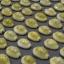 ขายเปลือกหอยเบี้ยจั๊กจั่น หอยเบี้ยจั่น Monetaria moneta thumbnail 3