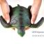 โมเดลเต่าทะเลสีเขียว ขนาด 10 นิ้ว ยางอ่อนนุ่มนิ่ม บีบได้ thumbnail 1