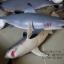 โมเดลปลาฉลาม Shark แบบยางอ่อนนุ่มนิ่ม ตั้งโชว์สวย ขนาดใหญ่ 14 นิ้ว thumbnail 7