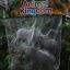 โมเดลสัตว์ชุดโขลงช้าง thumbnail 1
