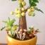 M001-ต้นมะยม 12 นิ้ว thumbnail 7