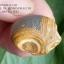 หินรูปทรงประหลาดจากทะเลทรายโกบี GOBI Eye Stone #GOBI001 thumbnail 5