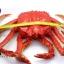 โมเดลปูอะลาสก้า Alaska Crab ตั้งโชว์สวย ขนาดใหญ่ 14 นิ้ว thumbnail 6