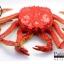 โมเดลปูอะลาสก้า Alaska Crab ตั้งโชว์สวย ขนาดใหญ่ 14 นิ้ว thumbnail 2