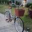 จักรยานแม่บ้าน สไตล์วินเทจ Winn DESIRE วงล้อ 26 นิ้ว พร้อมตะกร้า thumbnail 14