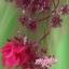 พร้อมเช่า ชุดแฟนซี ชุดราตรียาว สีเขียวอ่อน Cherry Blossom แต่งระบายสีชมพู ปักเลื่อมละเอียด thumbnail 10