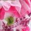 พร้อมเช่า ชุดแฟนซี ชุดราตรียาว สีเขียวอ่อน Cherry Blossom แต่งระบายสีชมพู ปักเลื่อมละเอียด thumbnail 13