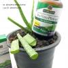 # รอยแผลเป็น # Nature's Answer, Aloe Vera Phytogel, 250 mg, 90 Veggie Caps