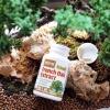 # คงความเด็ก # Jarrow Formulas, French Oak Extract, 100 mg , 60 Veggie Caps