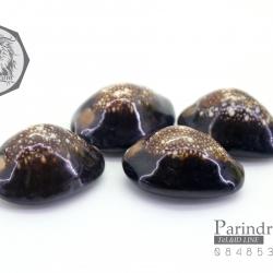 ขายเปลือกหอยเบี้ย หอยเบี้ยแก้ ขนาด 1.5 นิ้ว Monetaria caputserpentis