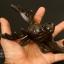 รูปหล่อหัวกวาง ขนาด 7 นิ้ว สำหรับการตกแต่งแนววินเทจ ใช้แขวนของได้ สวยงามมาก ทำจากโลหะ thumbnail 4